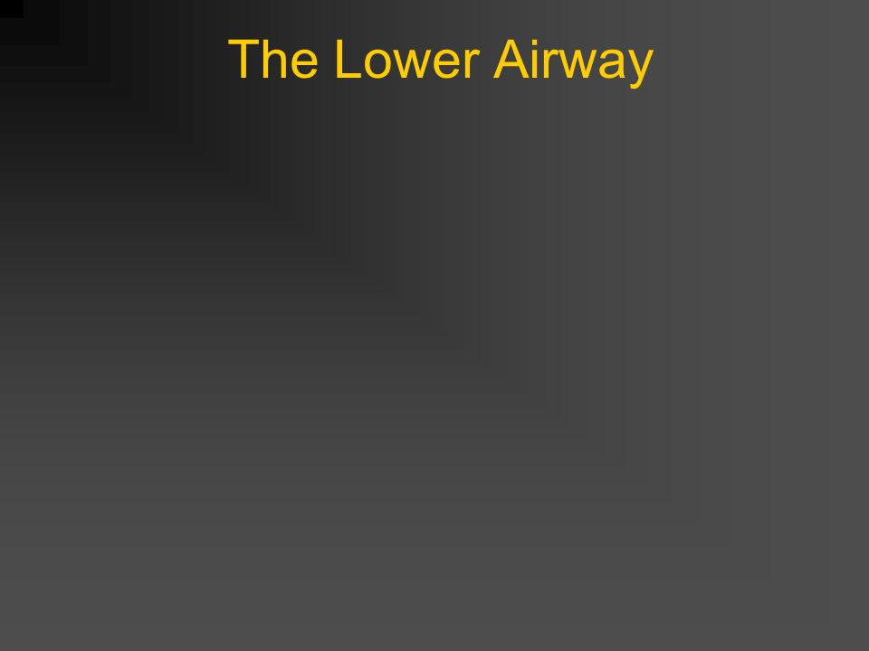 The Lower Airway