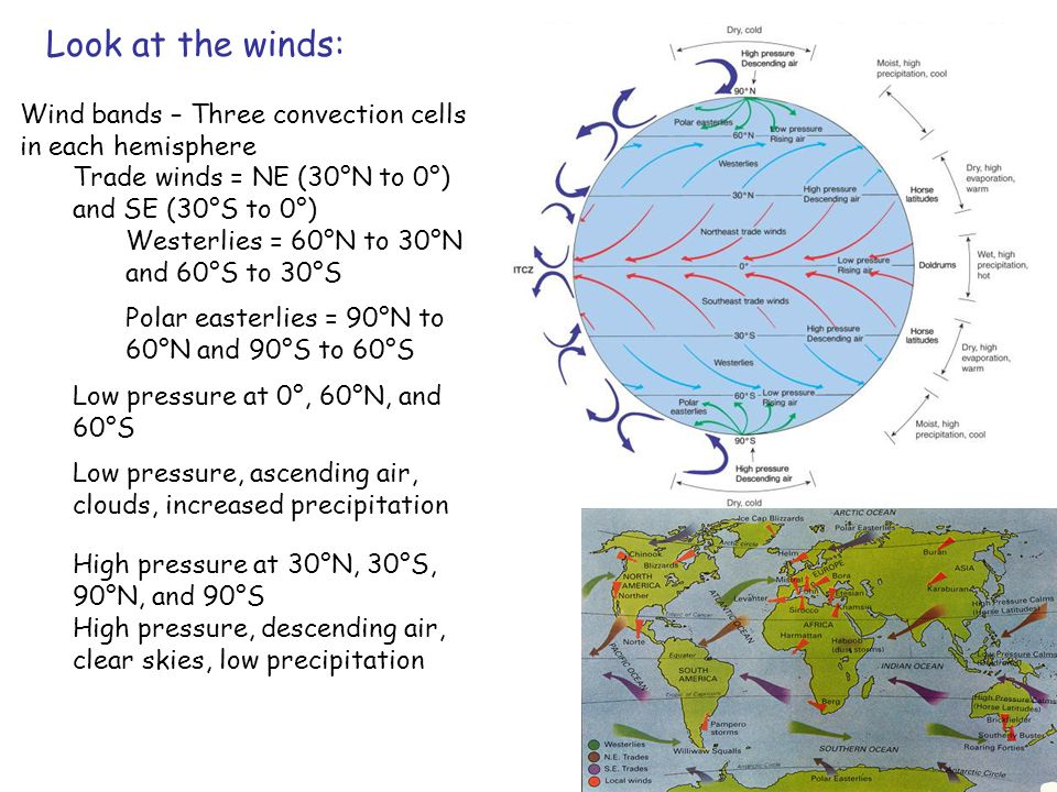 Wind bands – Three convection cells in each hemisphere Trade winds = NE (30°N to 0°) and SE (30°S to 0°) Westerlies = 60°N to 30°N and 60°S to 30°S Polar easterlies = 90°N to 60°N and 90°S to 60°S Low pressure at 0°, 60°N, and 60°S Low pressure, ascending air, clouds, increased precipitation High pressure at 30°N, 30°S, 90°N, and 90°S High pressure, descending air, clear skies, low precipitation Look at the winds: