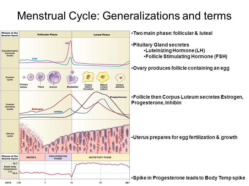 Reproductive Physiology 1Menstrual Cycle 2Pregnancy 3Lactation – Menstrual Cycle Worksheet