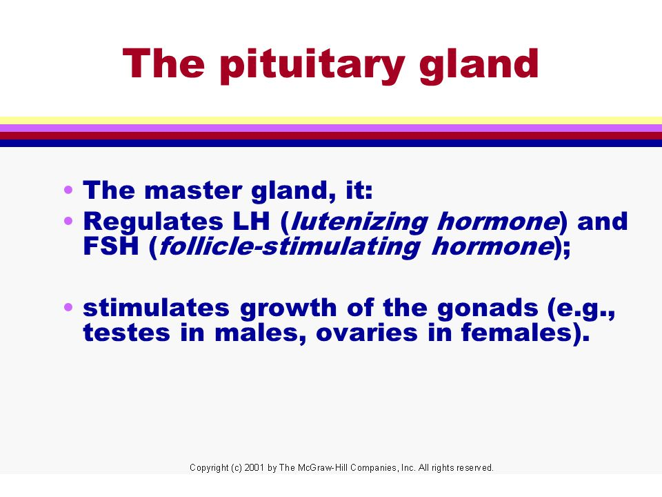 The pituitary gland The master gland, it: Regulates LH (lutenizing hormone) and FSH (follicle-stimulating hormone); stimulates growth of the gonads (e.g., testes in males, ovaries in females).
