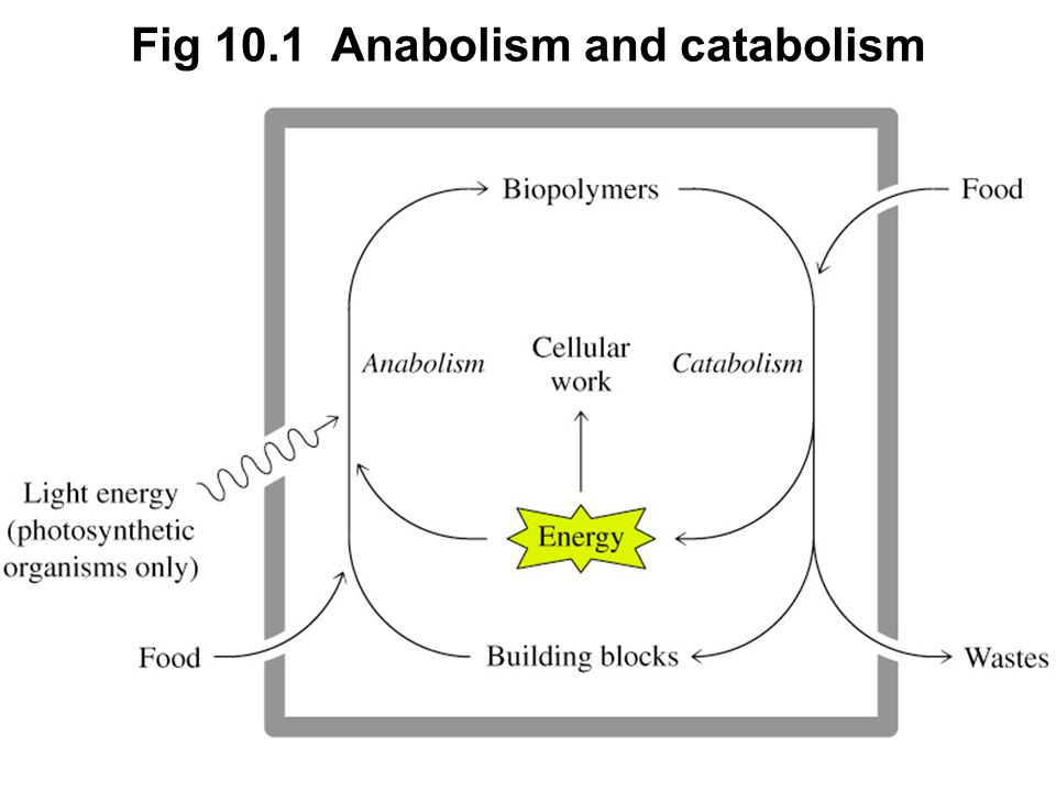 Prentice Hall c2002Chapter 102 Fig 10.1 Anabolism and catabolism