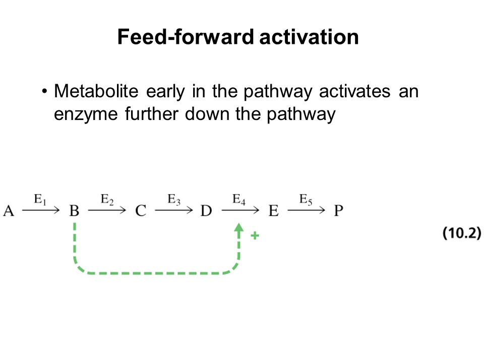Prentice Hall c2002Chapter 107 Feed-forward activation Metabolite early in the pathway activates an enzyme further down the pathway