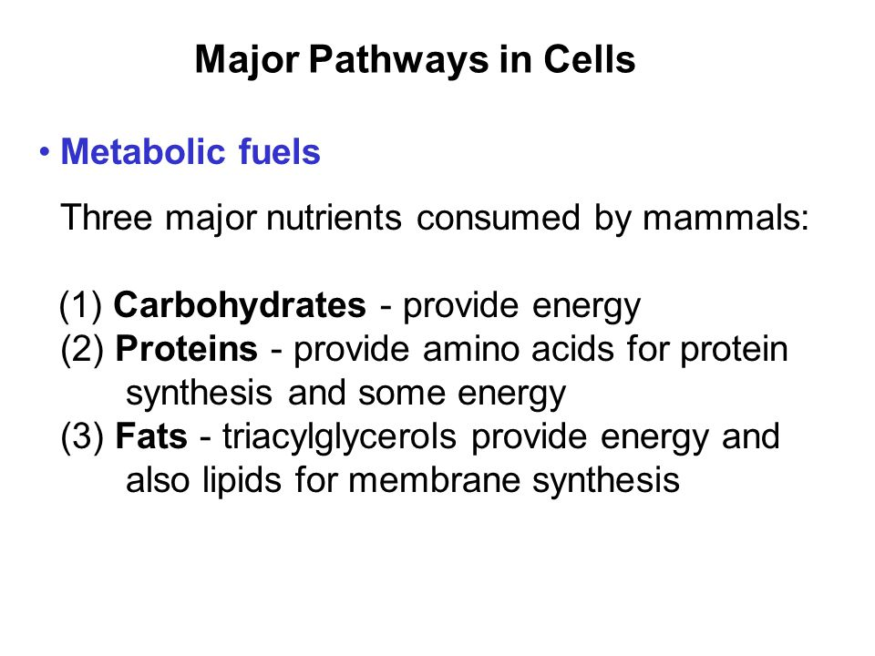 Prentice Hall c2002Chapter 108 Major Pathways in Cells Metabolic fuels Three major nutrients consumed by mammals: (1) Carbohydrates - provide energy (2) Proteins - provide amino acids for protein synthesis and some energy (3) Fats - triacylglycerols provide energy and also lipids for membrane synthesis