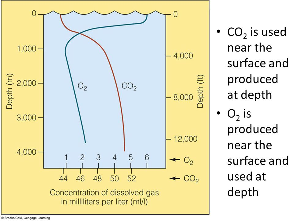 CO 2 is used near the surface and produced at depth O 2 is produced near the surface and used at depth