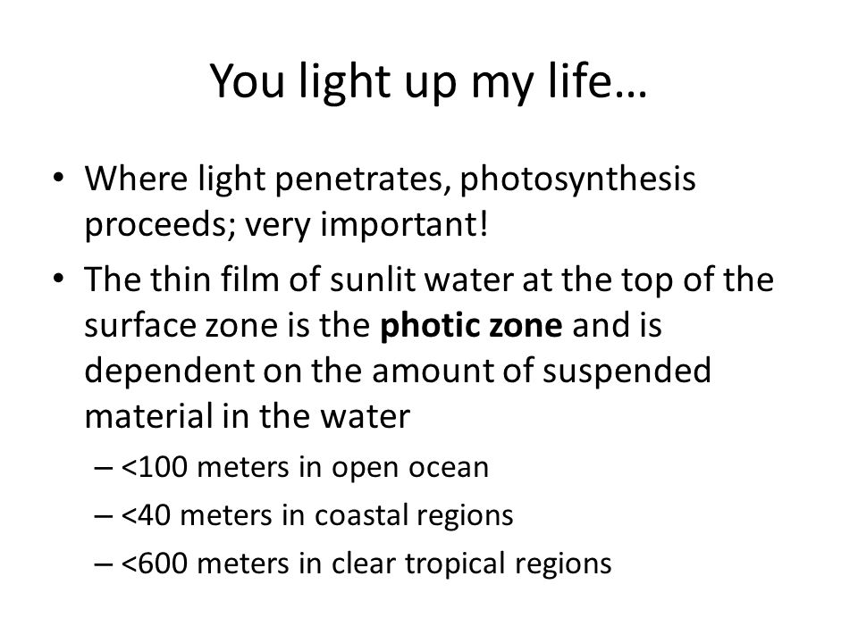 You light up my life… Where light penetrates, photosynthesis proceeds; very important.