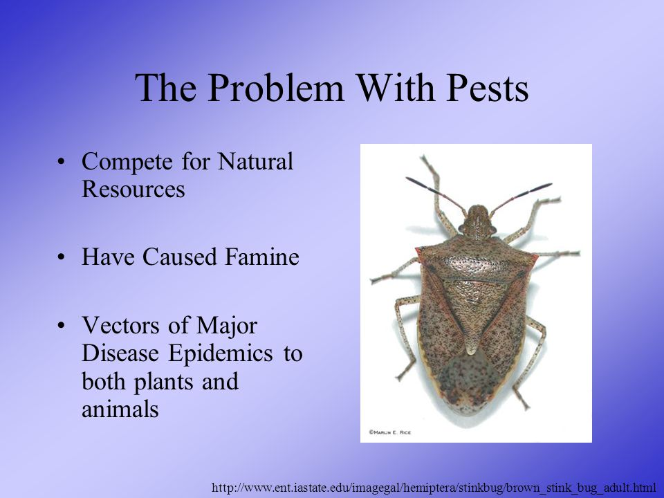 The Problem With Pests Compete for Natural Resources Have Caused Famine Vectors of Major Disease Epidemics to both plants and animals