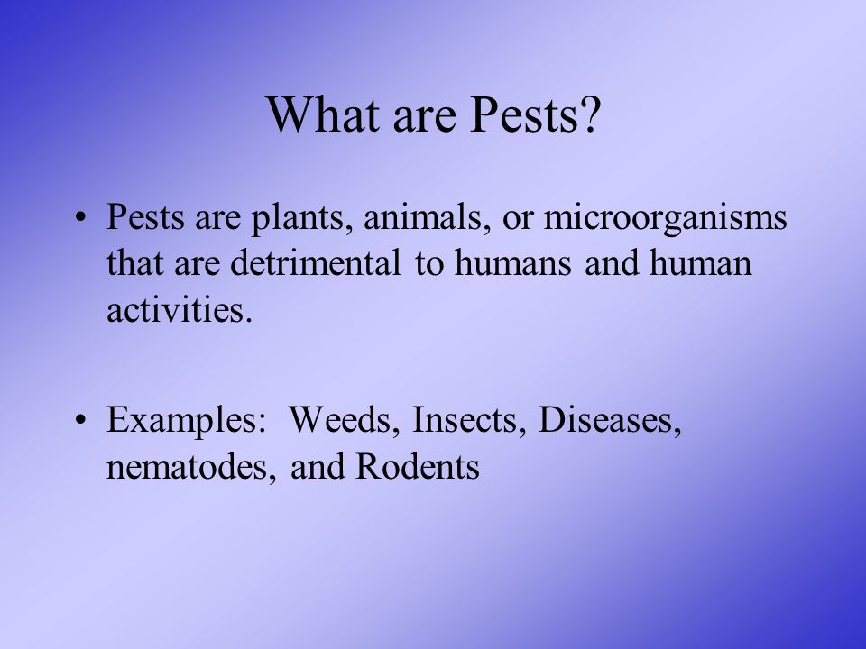 What are Pests.