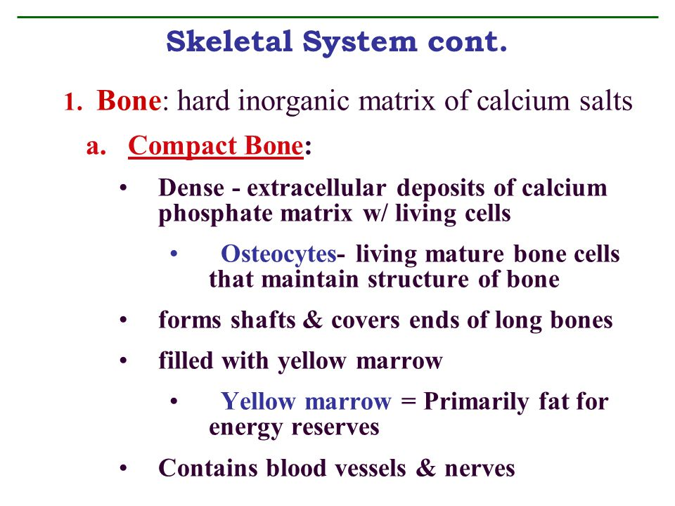 Skeletal System Chp. 5. Recall that connective tissue consists of ...
