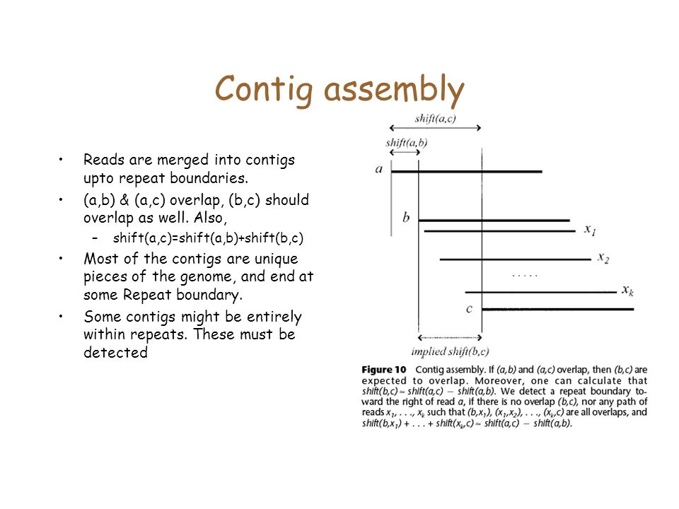 Contig assembly Reads are merged into contigs upto repeat boundaries.