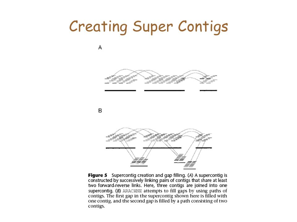 Creating Super Contigs