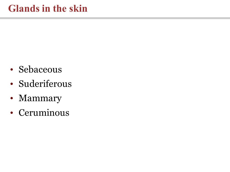 Sebaceous Suderiferous Mammary Ceruminous Glands in the skin