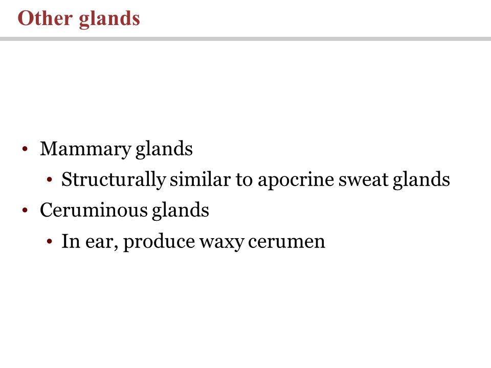 Mammary glands Structurally similar to apocrine sweat glands Ceruminous glands In ear, produce waxy cerumen Other glands