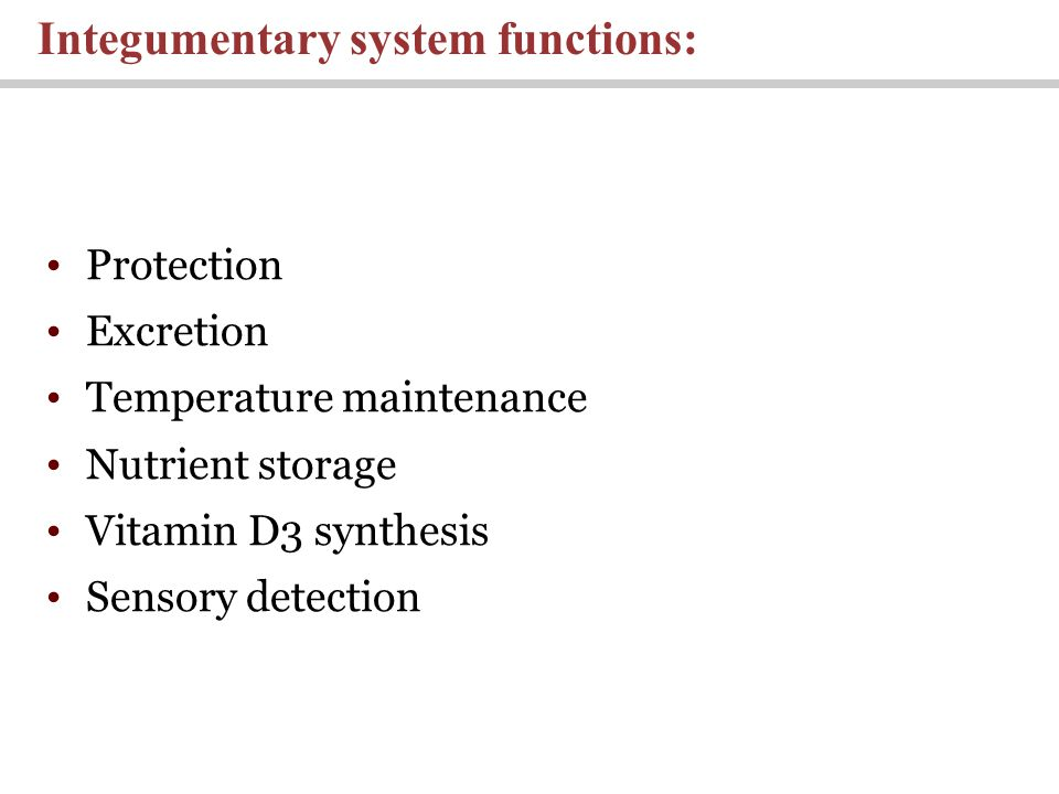 Protection Excretion Temperature maintenance Nutrient storage Vitamin D3 synthesis Sensory detection Integumentary system functions: