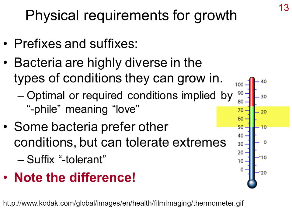 13 Physical requirements for growth Prefixes and suffixes: Bacteria are highly diverse in the types of conditions they can grow in.