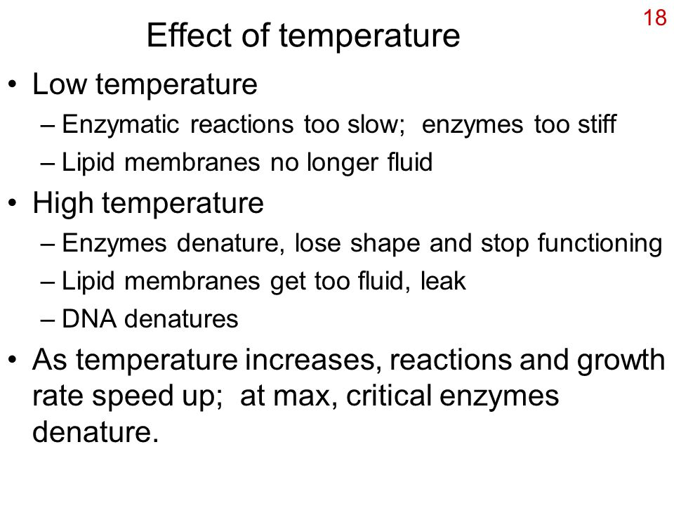 18 Effect of temperature Low temperature –Enzymatic reactions too slow; enzymes too stiff –Lipid membranes no longer fluid High temperature –Enzymes denature, lose shape and stop functioning –Lipid membranes get too fluid, leak –DNA denatures As temperature increases, reactions and growth rate speed up; at max, critical enzymes denature.