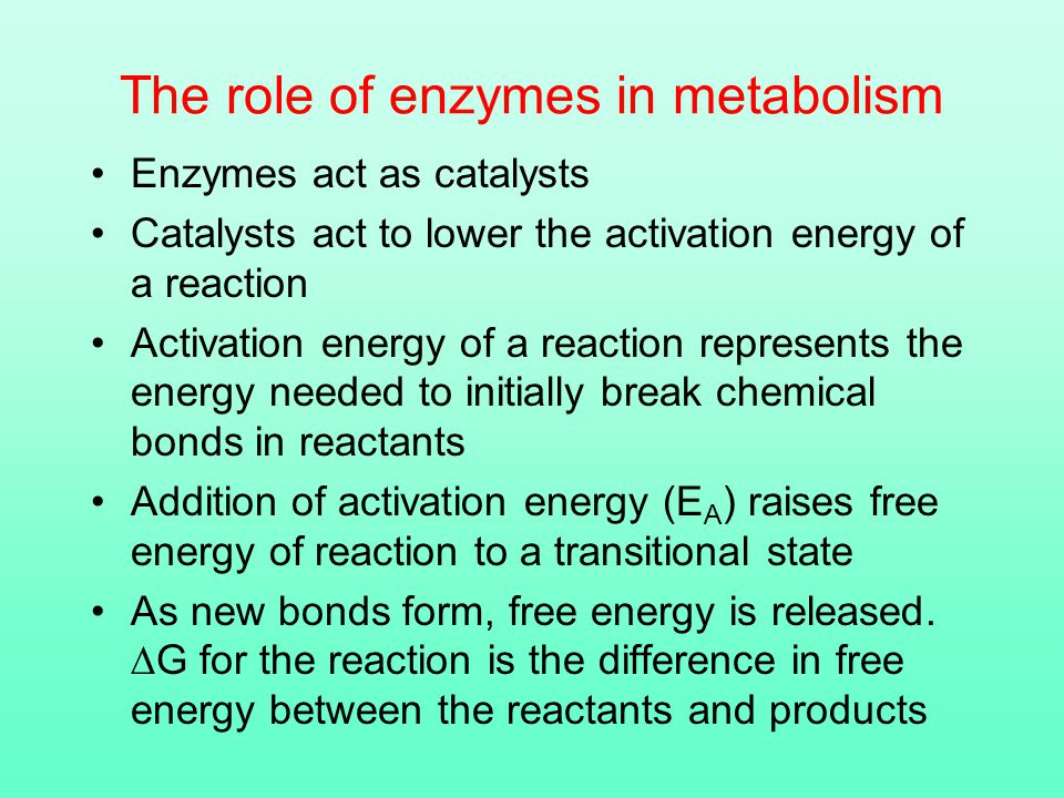 The role of enzymes in metabolism Enzymes act as catalysts Catalysts act to lower the activation energy of a reaction Activation energy of a reaction represents the energy needed to initially break chemical bonds in reactants Addition of activation energy (E A ) raises free energy of reaction to a transitional state As new bonds form, free energy is released.