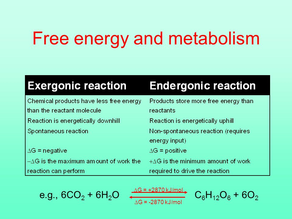 Free energy and metabolism e.g., 6CO 2 + 6H 2 O C 6 H 12 O 6 + 6O 2  G = kJ/mol  G = kJ/mol