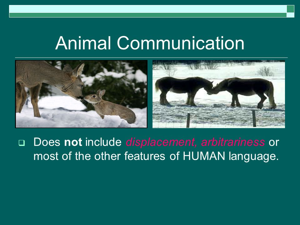 Animal Communication  Does not include displacement, arbitrariness or most of the other features of HUMAN language.