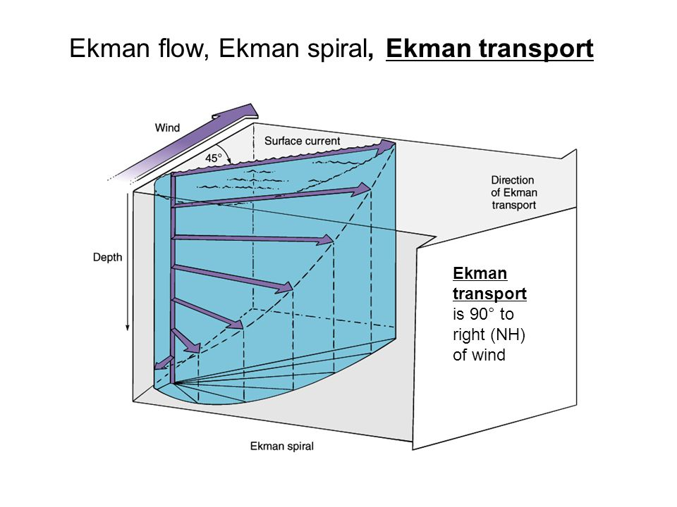 Ekman flow, Ekman spiral, Ekman transport Ekman transport is 90° to right (NH) of wind