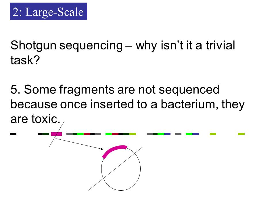 2: Large-Scale Shotgun sequencing – why isn't it a trivial task.