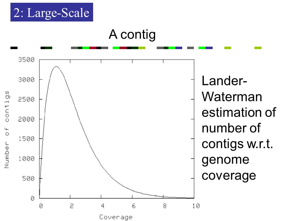 2: Large-Scale A contig Lander- Waterman estimation of number of contigs w.r.t. genome coverage
