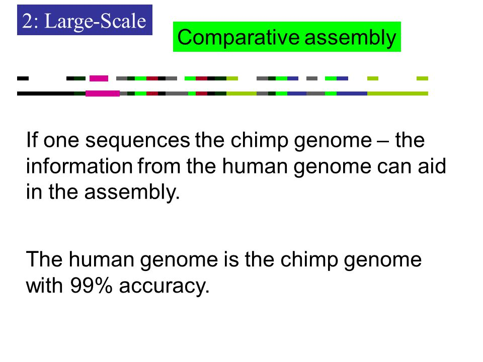 2: Large-Scale The human genome is the chimp genome with 99% accuracy.