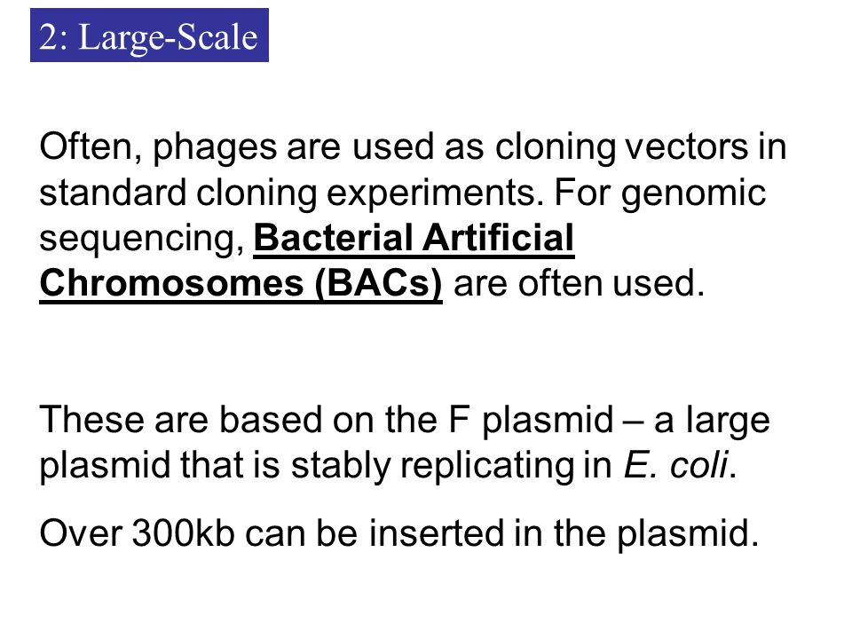 2: Large-Scale Often, phages are used as cloning vectors in standard cloning experiments.