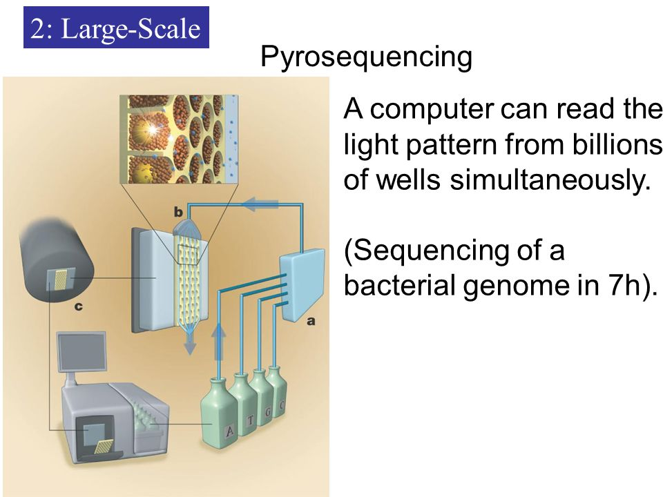 2: Large-Scale Pyrosequencing A computer can read the light pattern from billions of wells simultaneously.