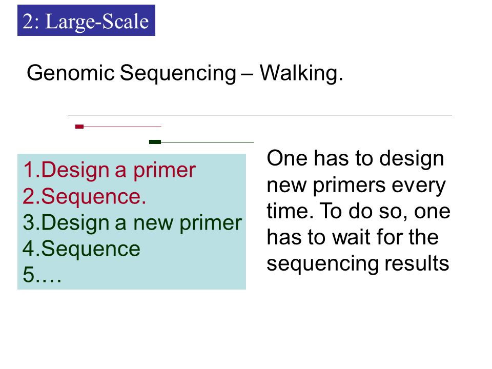 Genomic Sequencing – Walking. 1.Design a primer 2.Sequence.
