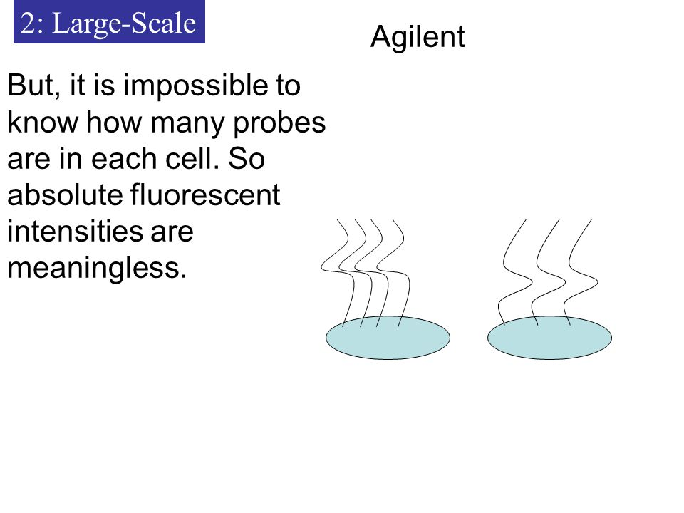 2: Large-Scale But, it is impossible to know how many probes are in each cell.