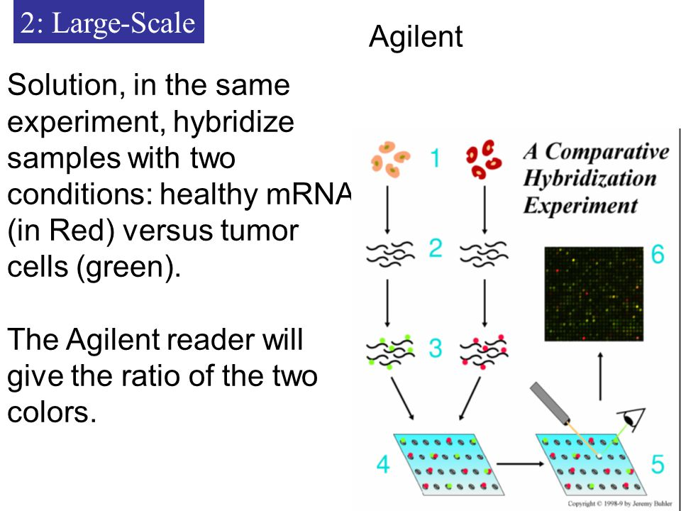 2: Large-Scale Solution, in the same experiment, hybridize samples with two conditions: healthy mRNA (in Red) versus tumor cells (green).
