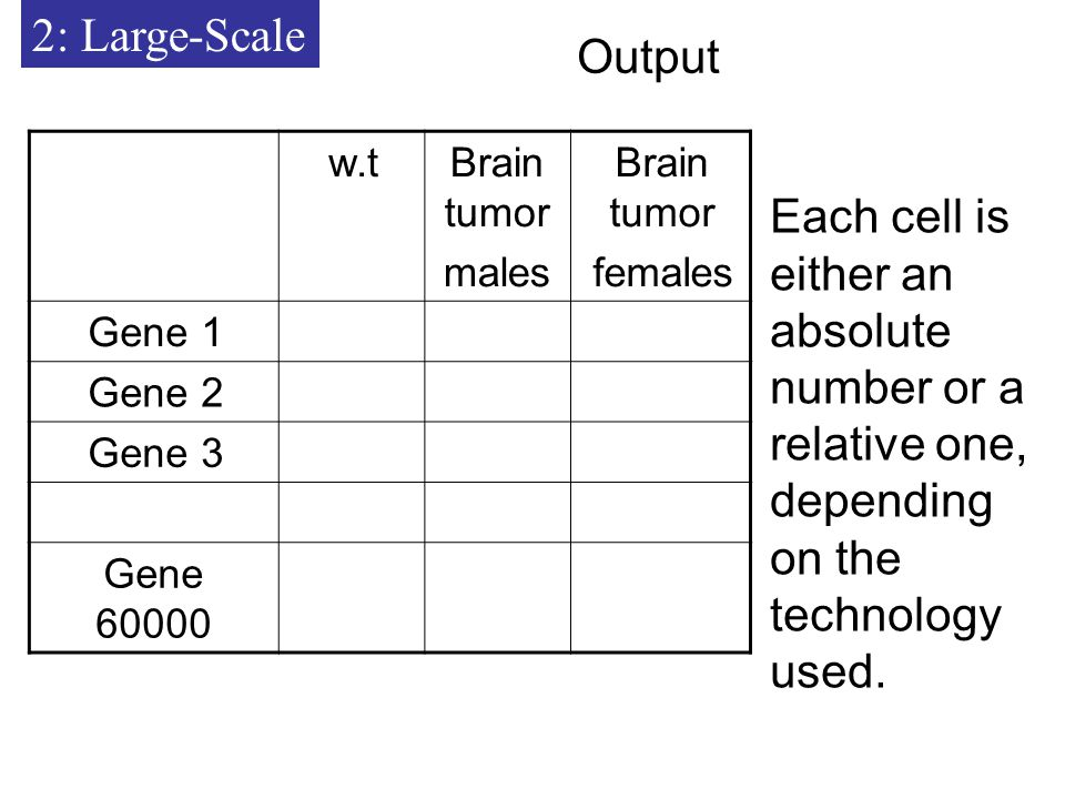 2: Large-Scale Output Brain tumor females Brain tumor males w.t Gene 1 Gene 2 Gene 3 Gene Each cell is either an absolute number or a relative one, depending on the technology used.