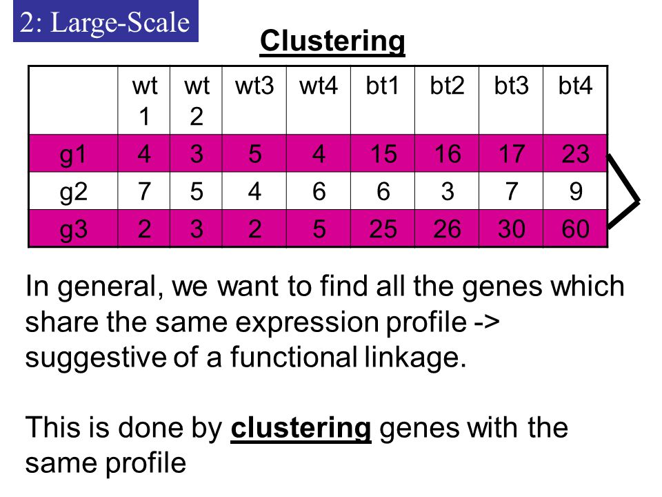 2: Large-Scale Clustering bt4bt3bt2bt1wt4wt3wt 2 wt g g g3 In general, we want to find all the genes which share the same expression profile -> suggestive of a functional linkage.