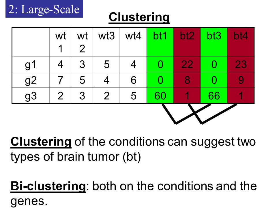 2: Large-Scale Clustering bt4bt3bt2bt1wt4wt3wt 2 wt g g g3 Clustering of the conditions can suggest two types of brain tumor (bt) Bi-clustering: both on the conditions and the genes.