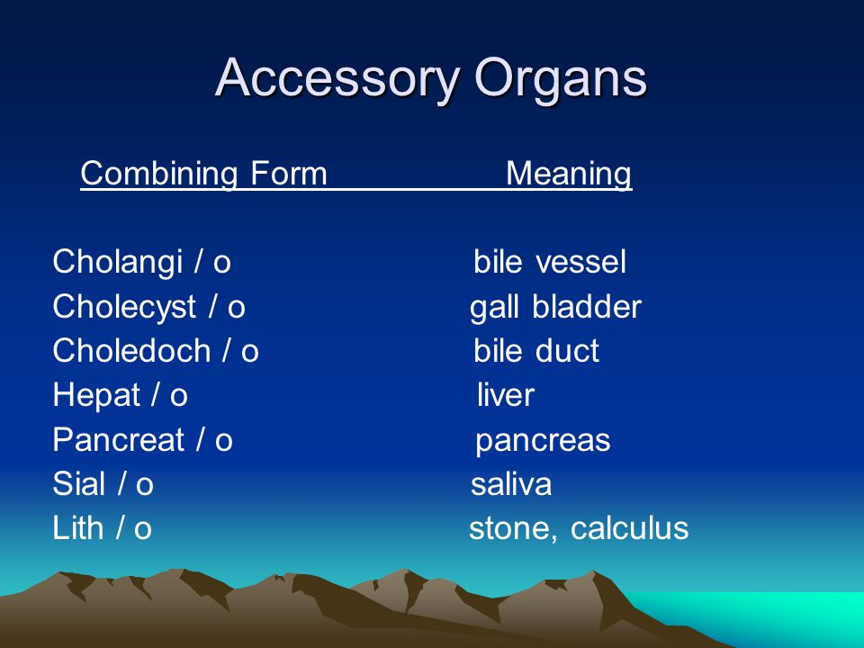 Digestive System. What is the Digestive System? Also called the GI ...