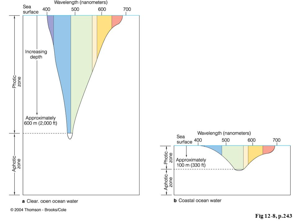 Fig 12-8, p.243 Open ocean (clear) vs. coastal (sedimented) waters