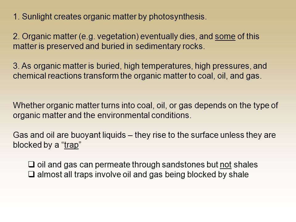 1. Sunlight creates organic matter by photosynthesis.