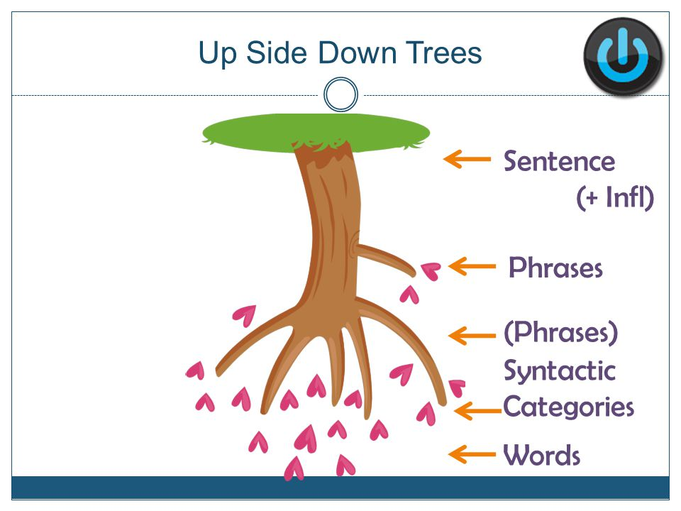 Up Side Down Trees Phrases (Phrases) Words Sentence (+ Infl) Syntactic Categories