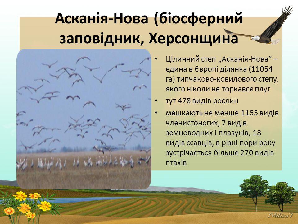 """Асканія-Нова (біосферний заповідник, Херсонщина Цілинний степ """"Асканія-Нова – єдина в Європі ділянка (11054 га) типчаково-ковилового степу, якого ніколи не торкався плуг тут 478 видів рослин мешкають не менше 1155 видів членистоногих, 7 видів земноводних і плазунів, 18 видів ссавців, в різні пори року зустрічається більше 270 видів птахів"""