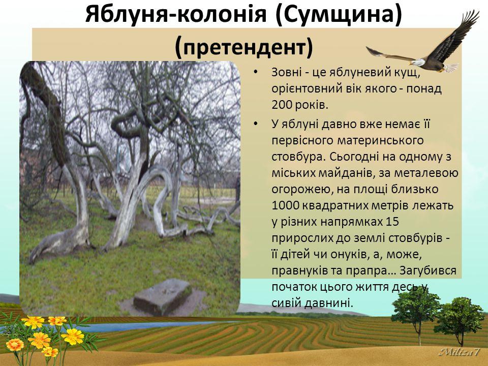 Яблуня-колонія (Сумщина) ( претендент) Зовні - це яблуневий кущ, орієнтовний вік якого - понад 200 років.
