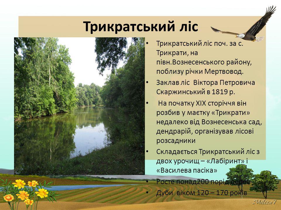 Трикратський ліс Трикратський ліс поч.за с.