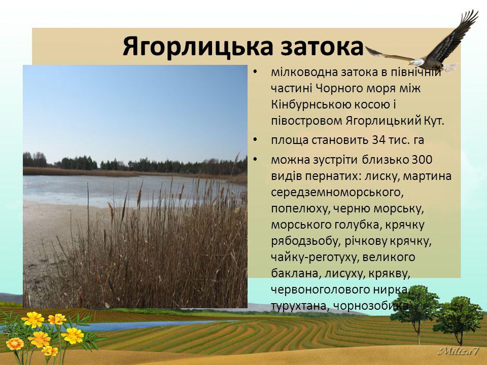 Ягорлицька затока мілководна затока в північній частині Чорного моря між Кінбурнською косою і півостровом Ягорлицький Кут.