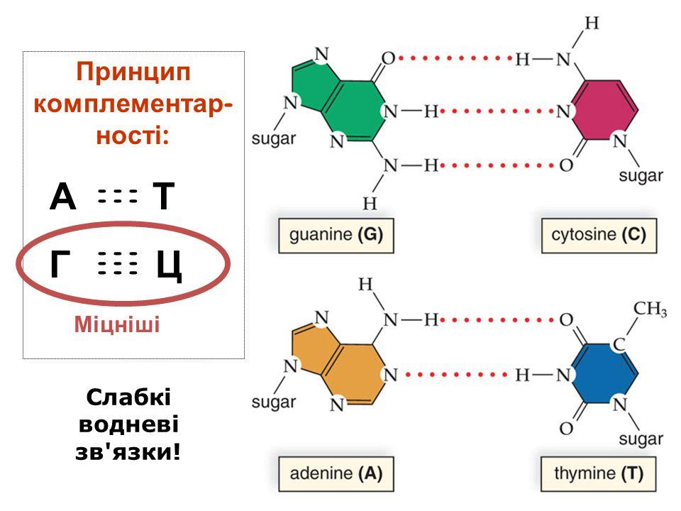 Принцип комплементар - ності : А Т Г Ц - - - Слабкі водневі зв'язки! Міцніші