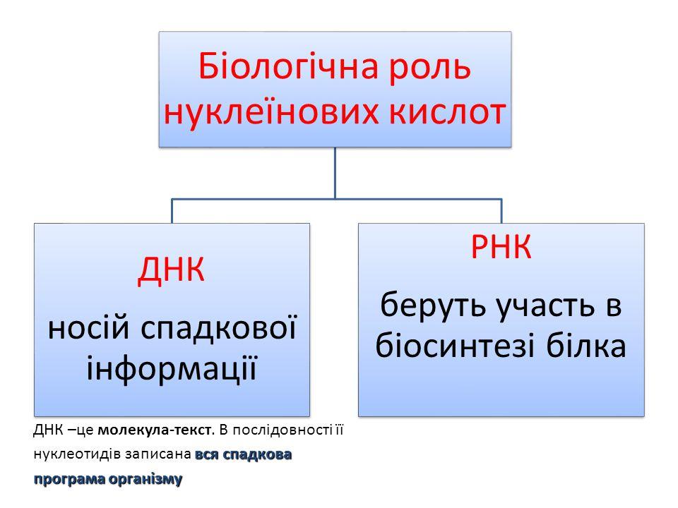 Біологічна роль нуклеїнових кислот ДНК носій спадкової інформації РНК беруть участь в біосинтезі білка вся спадкова програма організму ДНК –це молекул