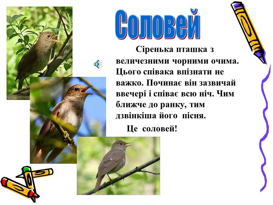 Давайте проведемо спостереження за деякими співучими птахами.