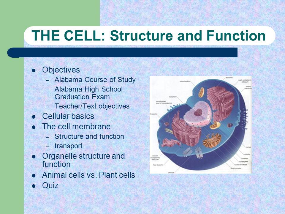 Printables Cell Structure Function Worksheet the cell structure and function objectives alabama course of study high school