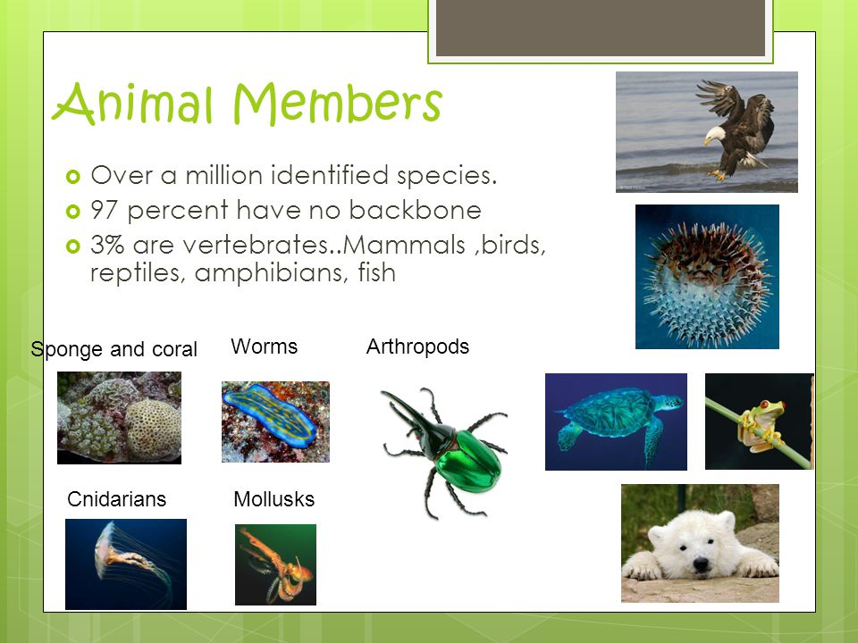 Animal Members  Over a million identified species.