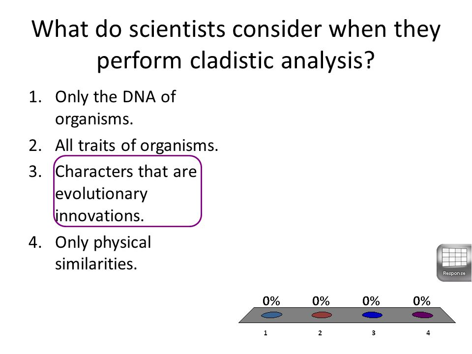 What do scientists consider when they perform cladistic analysis.