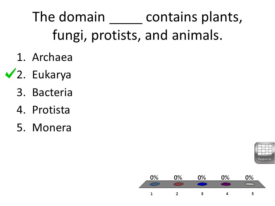 The domain contains plants, fungi, protists, and animals.