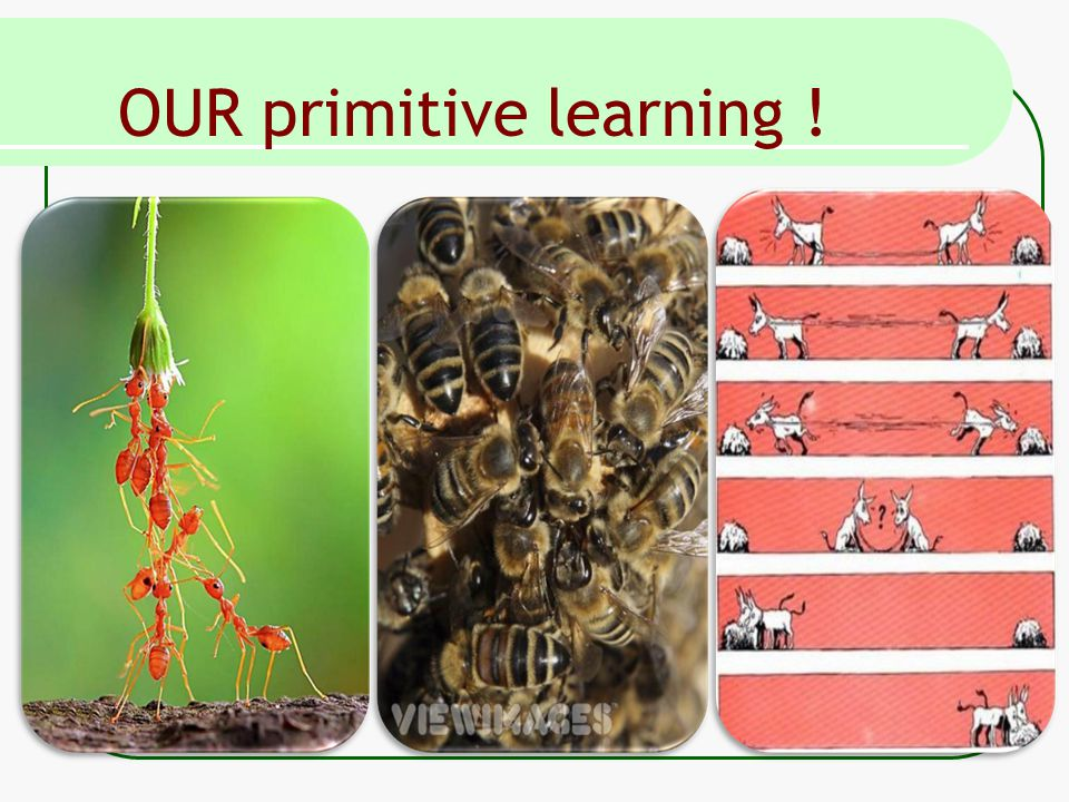 OUR primitive learning !